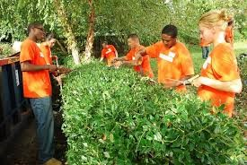 6 people trimming a hedge