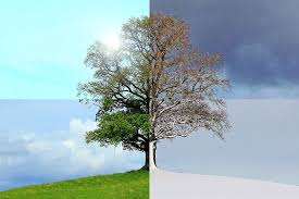 Picture of a tree showing the four seasons, spring, summer, fall and winter